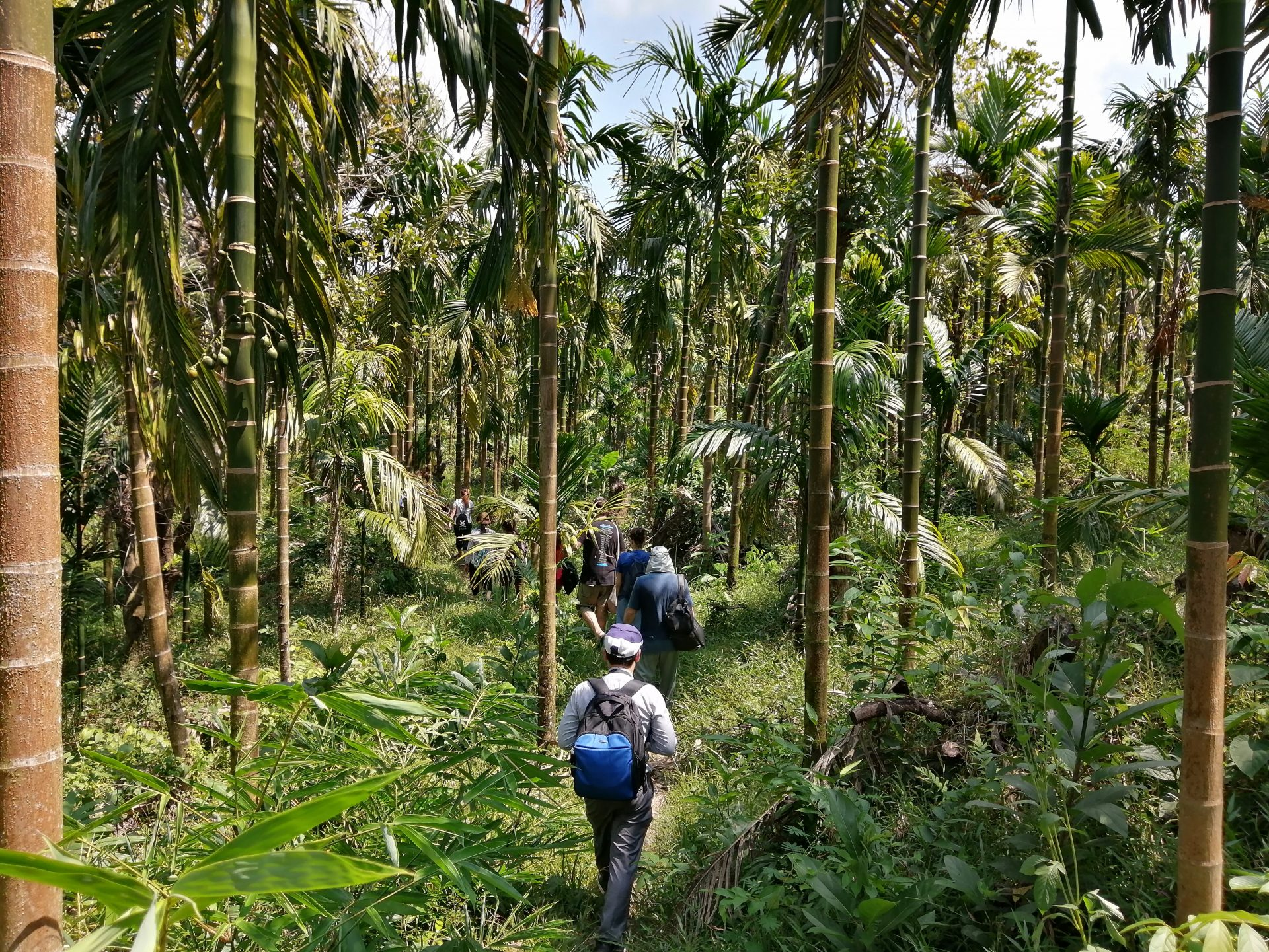 MYANMAR – Dawei – Jungle Trail and Forest Spa
