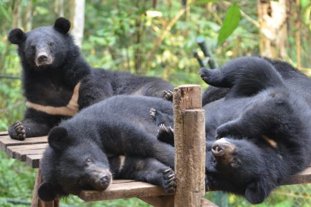 Laos – Luang Prabang – Bear Care Tour
