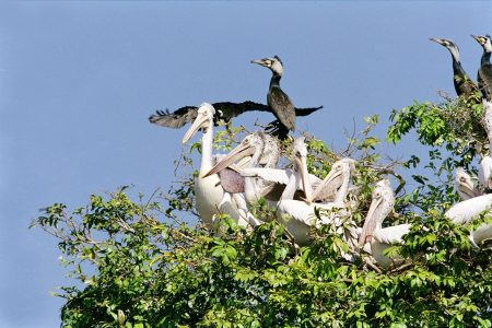 CAMBODIA – Siem Reap – Discovery of Prek Toal's Waterbirds and Floating Villages on Tonle Sap Lake